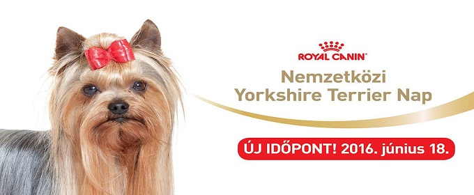 Royal Canin Yorkshire Terrier Nap